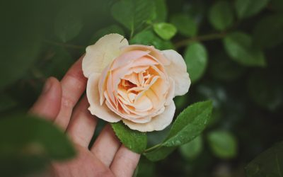 The Voices of Mothering Your Mother Within